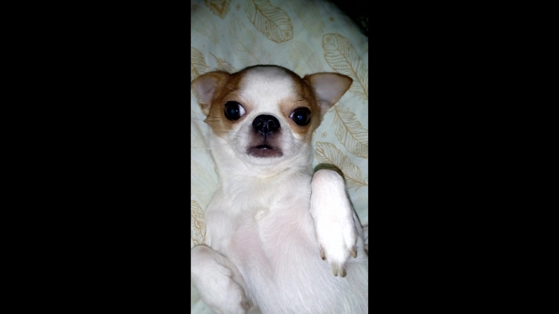 Миляй мой ми ми ми любимая собачка 😘😘😘