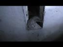 Подвал - шахта вентиляции