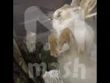 Животные насмерть замерзли в Астане