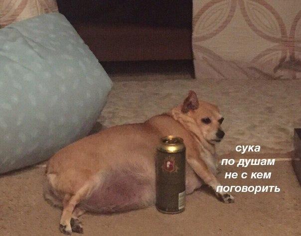 Фото №456274239 со страницы Михаила Кравцова