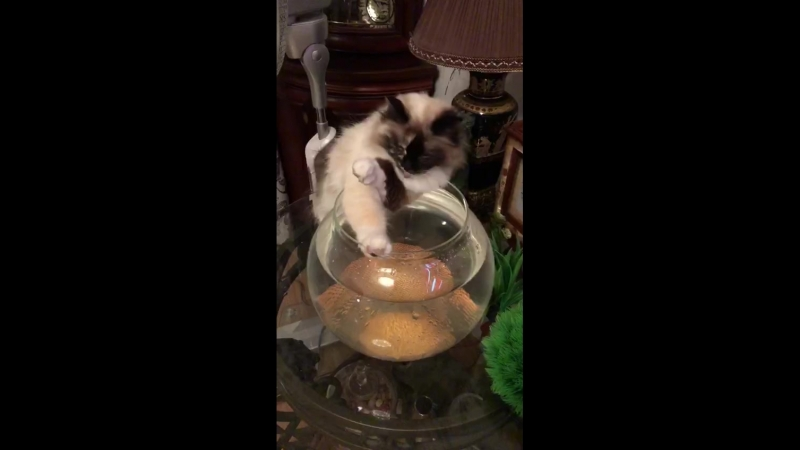 пупсик и аквариум