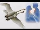 Видеоклип на песню Лебединая верность. Поёт автор клипа - Наталья Левина.