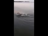 Когда что-то коснулось тебя под водой....)