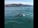 Дельфины устроили шоу в Сочи.. 🐬
