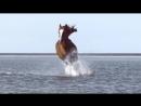 Comercial Voyage d Hermès Eau de