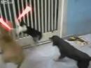 Cat treck