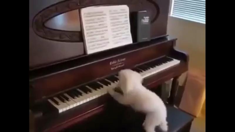 Великие пианисты