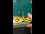 Рыбки под гипнозом))) в исполнении Тамары Сабуровой