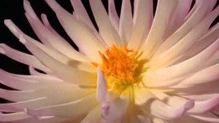 заключительная музыка из сеансов А.Кашпировского