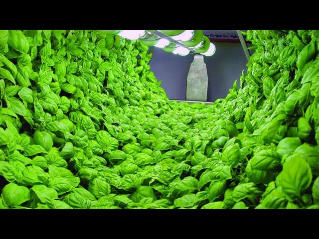Crazy processing machine 2018 | Hydroponics Factory