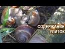 Фермер Сергей Балаев Содержание разведение и выращивание улиток Улиточный би