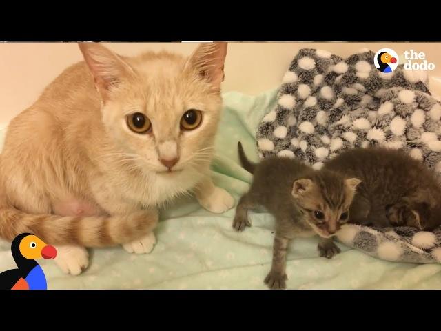 Cat Mom Nurses Orphaned Kittens   The Dodo