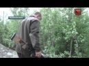 Оголодавшие медведи повадились лакомиться на кладбище в Апатитах