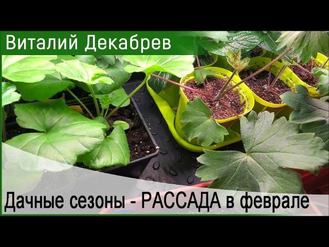 Дачные сезоны с Виталием Декабревым РАССАДА