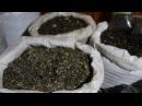 Купить Богатырский Иван Чай Тульского Мастера и другие травы полезные большой в