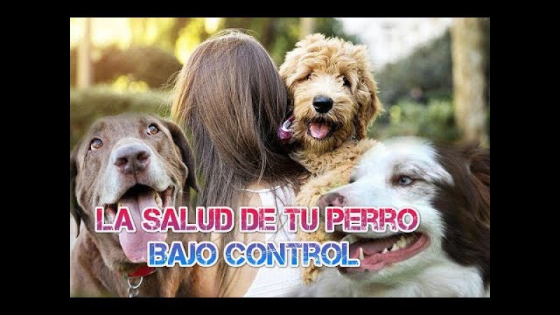 La salud de tu perro bajo control