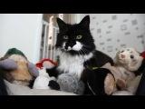 Это чей корсет, любимый Пара чуть не рассталась из-за кота!