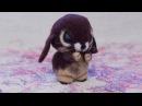 Пошаговый мастер класс по сухому валянию из шерсти для начинающих Как сделать забавного кролика