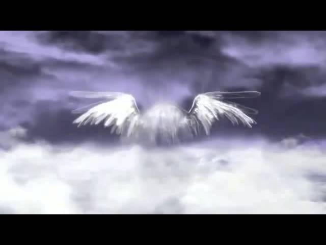 Футаж-Крылья