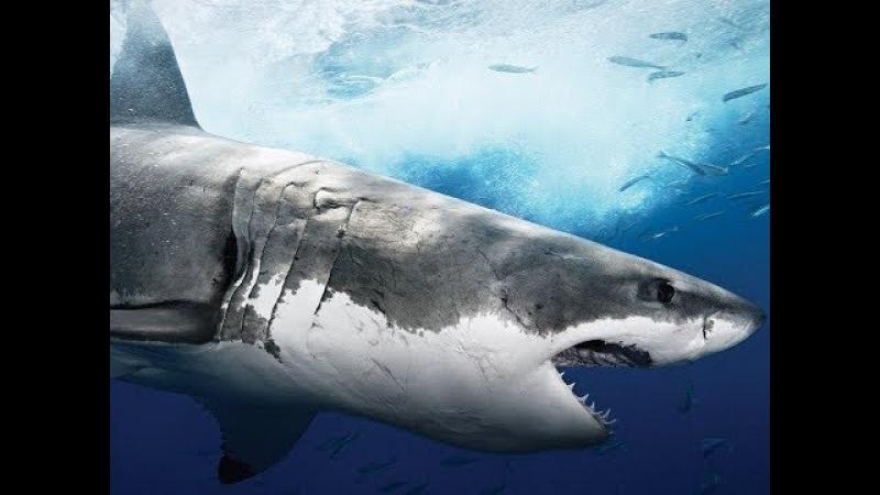 Доисторические хищники.Акула чудовище