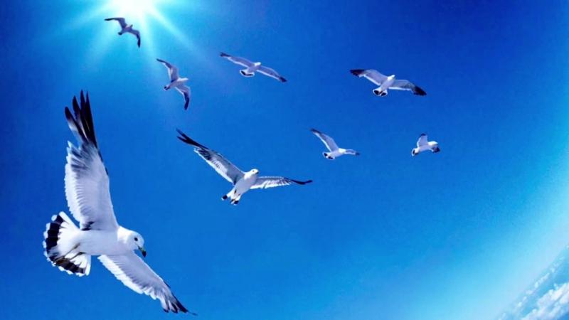 Небо - птицам! (муз. И. Кирилина, сл. Л. Лазаревой)
