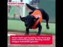 Собака Коль вытворяет чудеса на поле