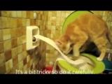 Кот, который гадит в унитаз