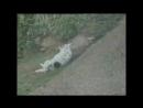 Собачка любит кататься на дороге. Видео прикол