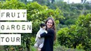 Как растёт авокадо 💚Прогулка по фруктовому саду в Андалузии ВЛОГ