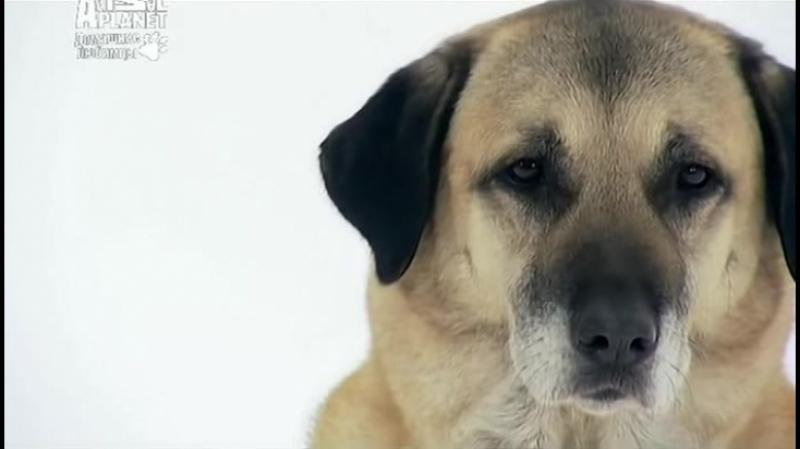 Введение в собаковедение (Серия №33)