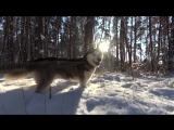 Что может быть лучше, чем прогулка по лесу в хороший солнечный денек )
