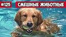 Смешные животные собаки и басейн Bazuzu Video ТОП подборка 125 апрель 2018
