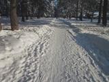 Старая Купавна. Прогулки по зимнему лесу (Видео-зарисовка)
