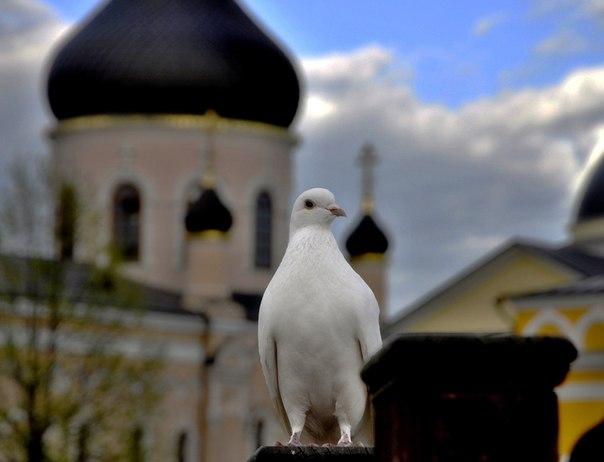 Фото №456258086 со страницы Марины Щербаковой