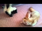 Baby Skunk and Fennec Fox
