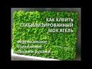 Как клеить стабилизированный мох Вертикальное озеленение своими руками Zelenka Show6