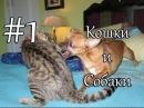 Милые коты и смешные животные кошки - супер приколы кошки и собаки видео с кошками 2014