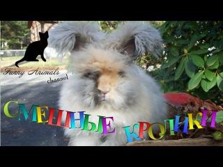 Забавные кролики #1. смешные и веселые кролики. Funny rabbits compilation Part 1. Funny Animals
