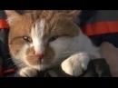Валуев, кот и Крымский мост: кто самый главный - Гражданская оборона, 20.02.2018
