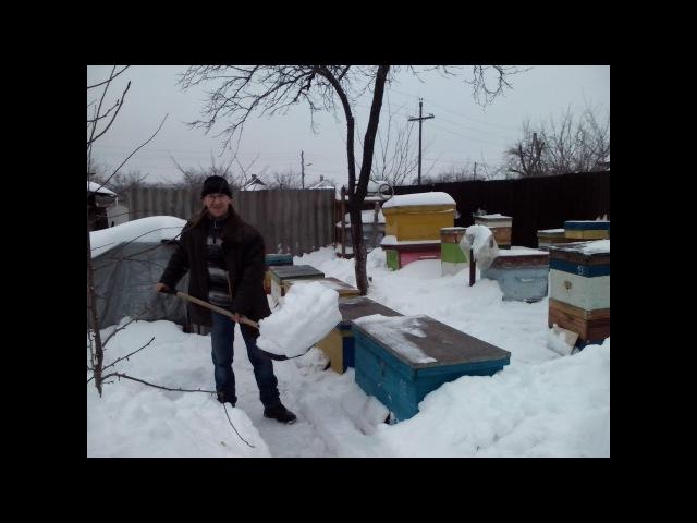 Зимовка пчел на воле 26.01.2018
