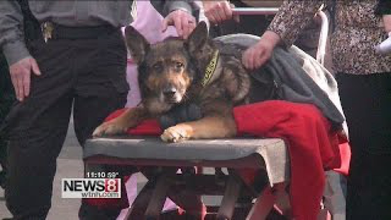 Police dog put down after one final ride in squad car