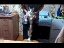 Lambada cat