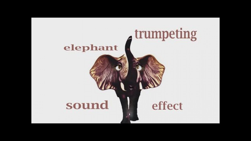 How A Elephant Trumpeting - Sound Effect - Animation