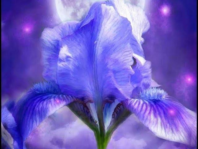 Волшебный мир цветов. Художник Carol Cavalaris