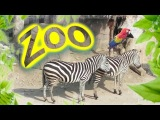The Zoo SongWe are going to the ZooМы идем в ЗоопаркLe Cornelle