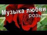 Красивая музыка любви и розы для любимой