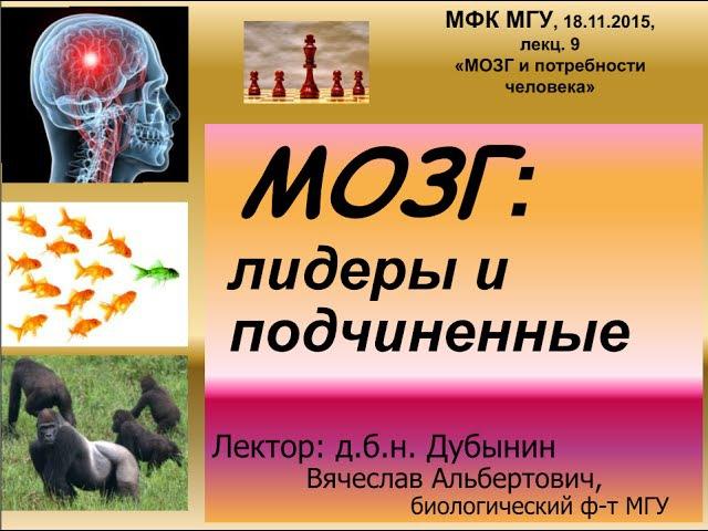 Дубынин Вячеслав - Мозг: лидеры и подчинённые le,syby dzxtckfd - vjpu: kblths b gjlxby`yyst