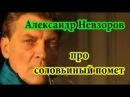 Александр Невзоров про Соловьиный помет