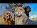 ПОПРОБУЙ НЕ ЗАСМЕЯТЬСЯ - Смешные Приколы и фейлы с Животными до слез, смешные собаки 65