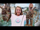 Spiny Florida Lobster and SO MUCH MORE Fans, Goliath Grouper and millions of fish